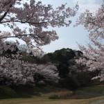 赤松尾公園桜風景